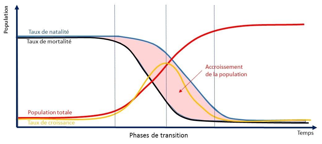 Démographie graphique 4